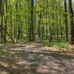 Forrest-Hills,-MI